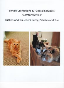 "Meet our ""Comfort Kitties"""